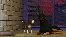 Image of the game Pets